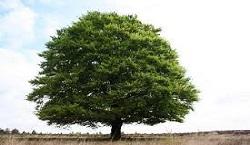 drzewo logo.jpeg