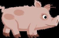 świnka.png