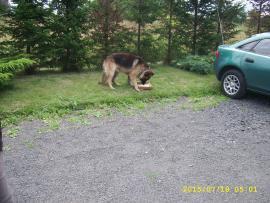 Galeria Znaleziono psa