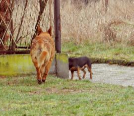 Galeria Znaleziono psy w Polskiej Nowej Wsi